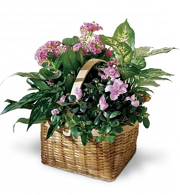 Plants: Basket of Hope