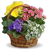 Plants: Spring Has Sprung Basket