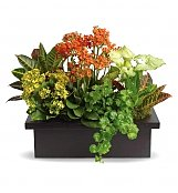 Plants: Stylish Plant Assortment