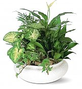 Plants: Green Dish Garden