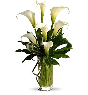 White Calla Lily Tribute