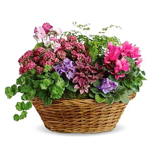 Simply Chic Plant Basket - just add the ring