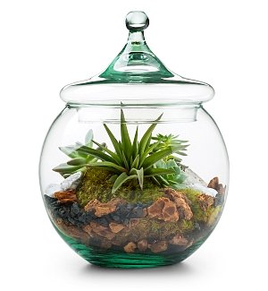 Home Decor: Glass Globe Terrarium Kit