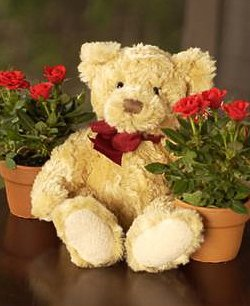 Cupid's Roses and Teddy Bear