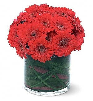 Red Gerbera Daisy Bunch