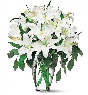 Magnificent White Lilies