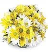 Flower Bouquets: Thinking of You Daisy Bowl